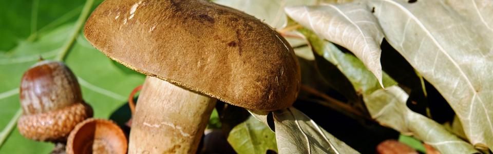 Commune de Ham-sur-Heure-Nalinnes | Exposition champignons