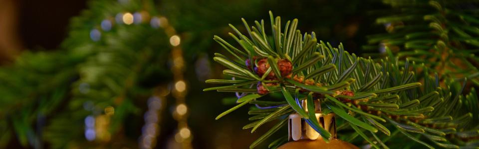 Commune de Ham-sur-Heure-Nalinnes | Collecte des sapins de Noël