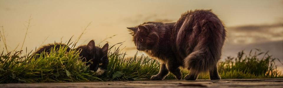 Commune de Ham-sur-Heure-Nalinnes | Campagne de stérilisation des chats